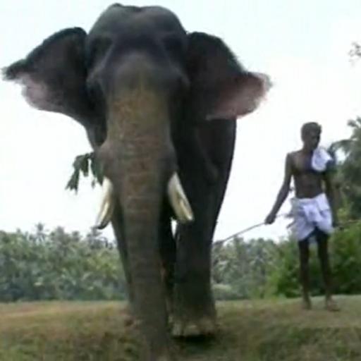 L'Homme et l'Éléphant-image4